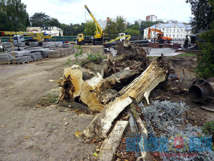 При ремонте теплотрассы в центре Витебска погибли пять деревьев. Вместо них посадят 30